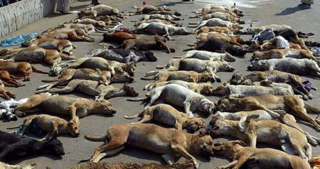 Pakistan'da onlarca köpek öldürülüp, kireçli suya atıldı