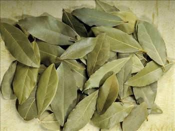 03 d Defne yaprağının faydaları