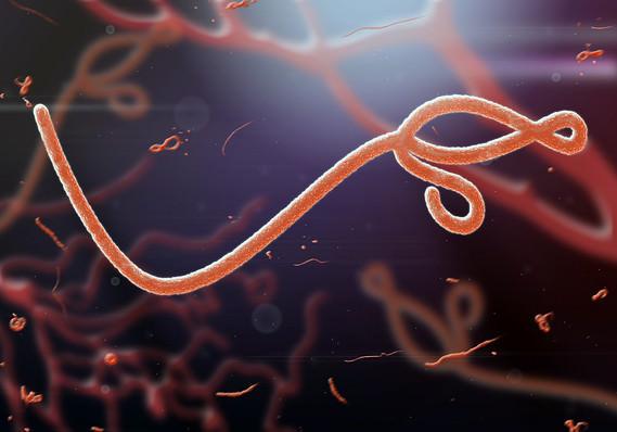 Ebola virüsü spermde 9 ay yaşayabiliyor