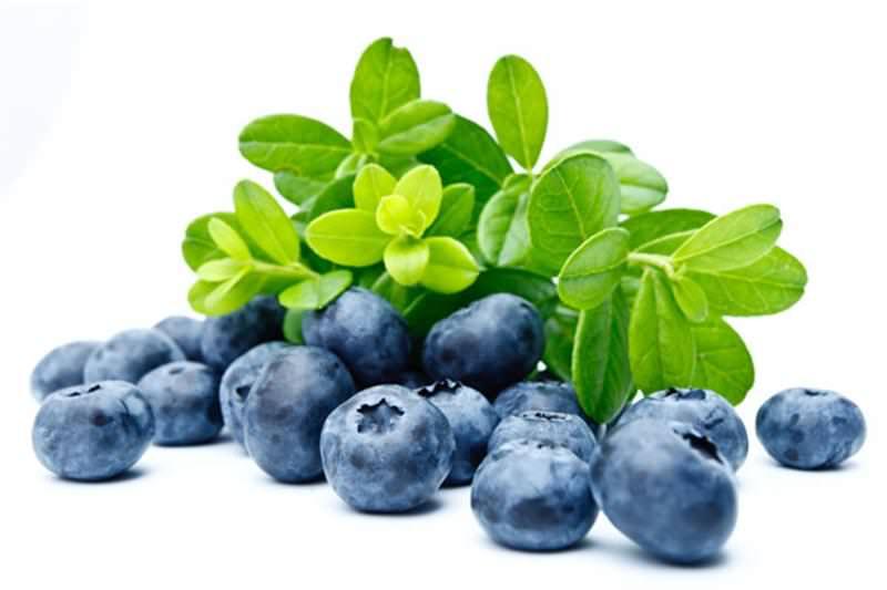 empotans bitkisel tedavi