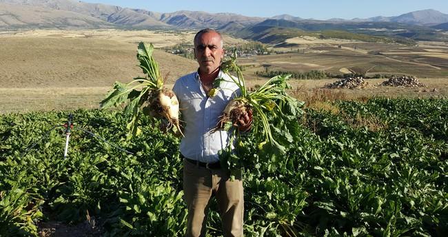 Çiftçiler taşıma su ile dağ zirvesinde şeker pancarı yetiştirdi
