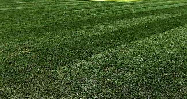İşte herkesin merak ettiği hibrit çim