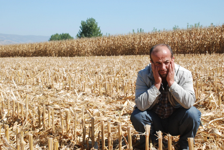 15 dönüm ekini hasat edip çaldılar