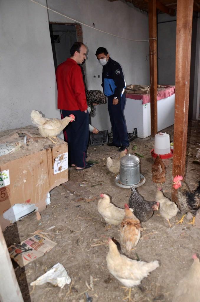 4 katlı apartman tavuk kümesi çıktı