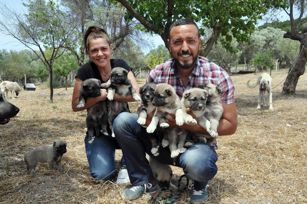 İstanbul'dan kaçıp İzmir'de köpek çiftliği kurdular