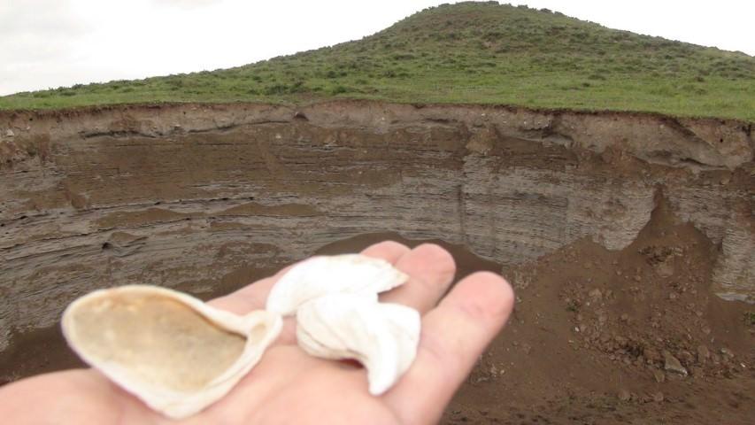 Kars'ta deniz kabuğu ve kumuna rastlandı