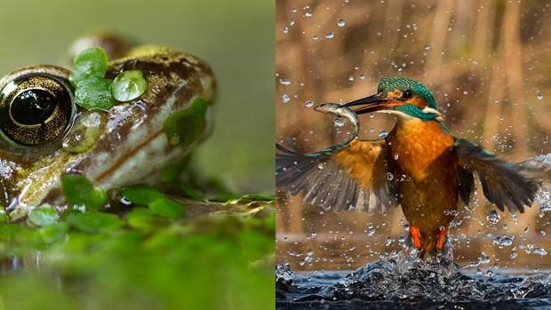 2016'nın en iyi vahşi yaşam fotoğrafları
