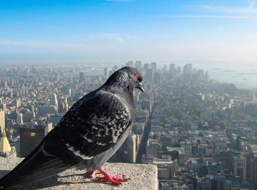 Bir de kuş bakışı bakın