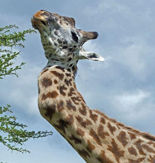 Dünyanın en ilginç hayvanları