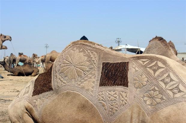 Hayran bırakan deve süslemeleri!