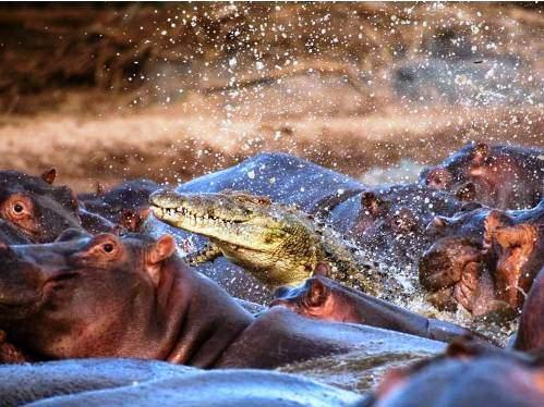 Hayvanların inanılmaz fotoğrafları