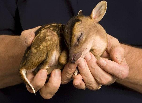 İçinizi ısıtacak 30 bebek hayvan fotoğrafı