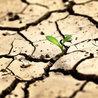 """İklim Konferansı'nda fakir ülkelerin """"dışlanma"""" endişesi"""