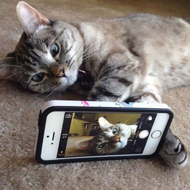 Instagram'ın fenomen kedisi Nala