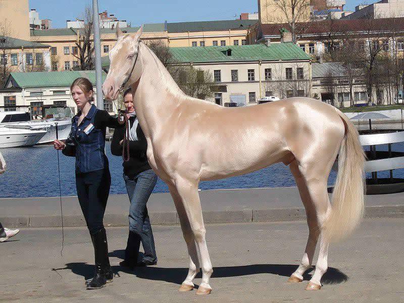 İşte dünyanın en güzel atı