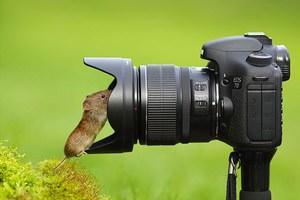 Kendi fotoğrafını kendi çeken hayvanlar