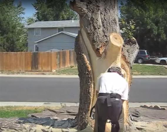 Kurumuş ağaçtan bakın ne yaptı!