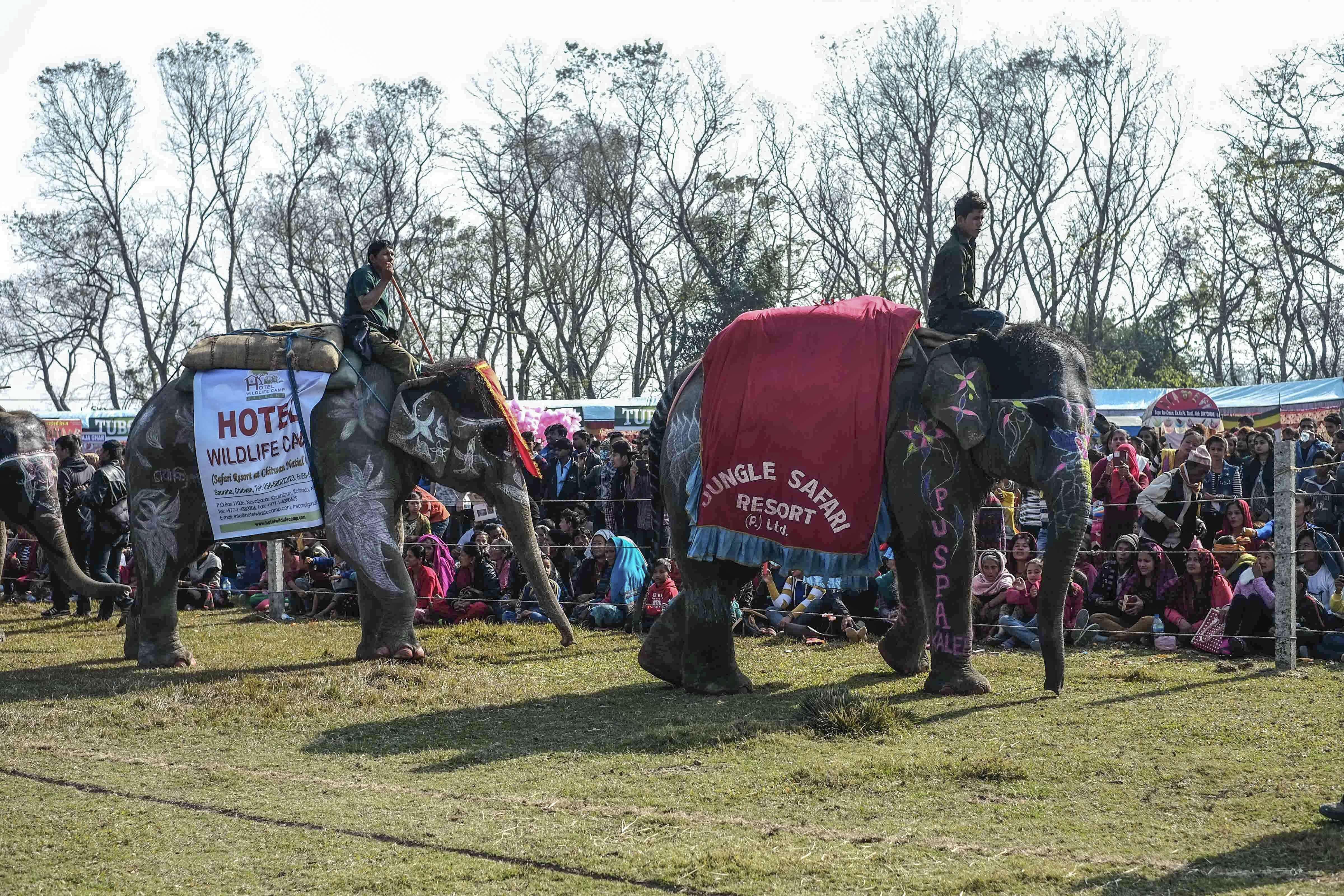 Nepal'de fil festivali