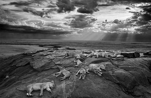 Vahşi doğanın en iyi fotoğrafları