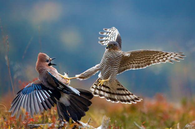 Vahşi hayattan ödüllü 15 muhteşem fotoğraf