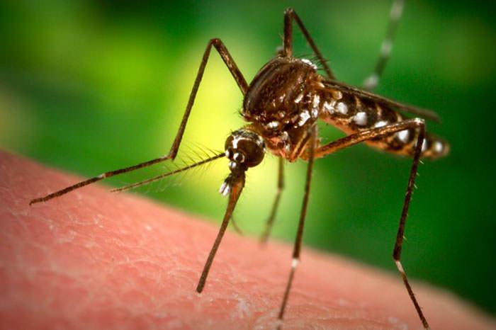 Yeni tehdit Zika virüsü