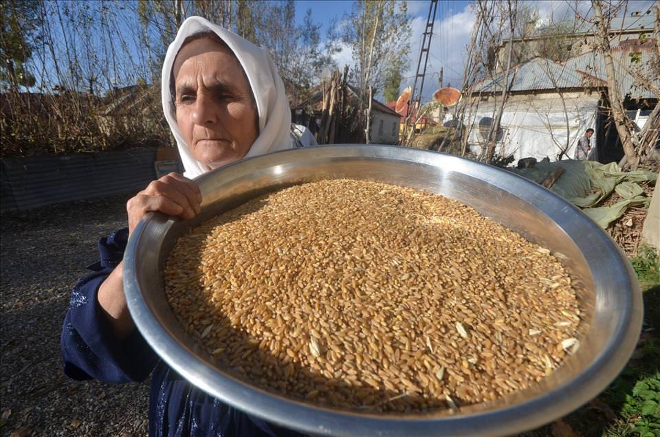Hakkari'de asırlık buğday dövme geleneği
