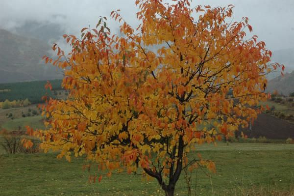 Posof'ta sonbahar renkleri
