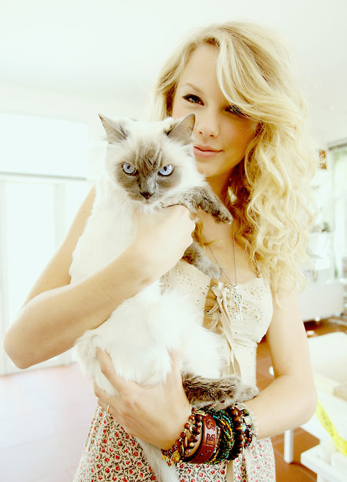 Taylor Swift'in kedi tutkusu