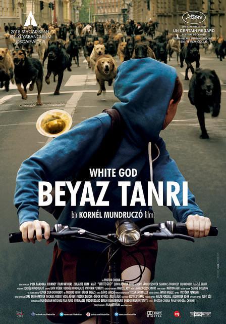Beyaz Tanrı filminden kareler