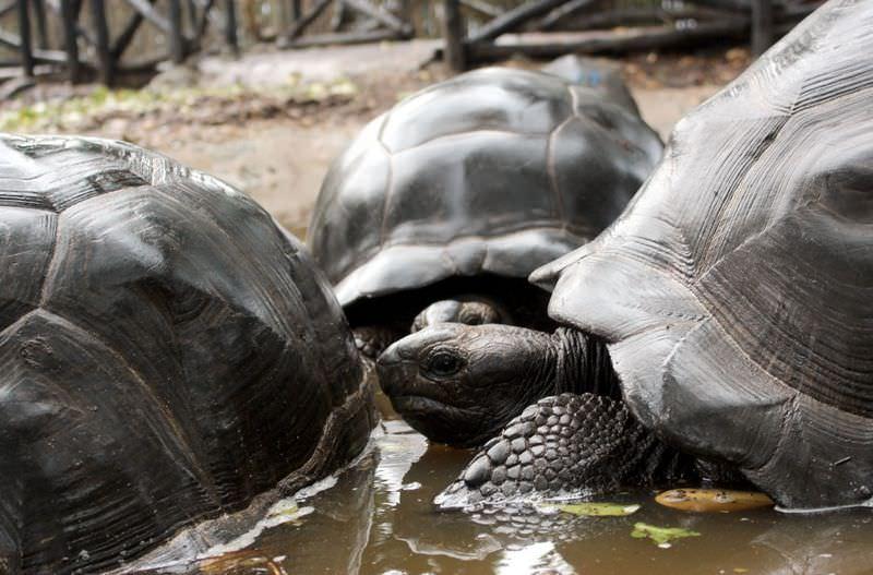 """Zanzibar'da """"kaplumbağalar ülkesi"""""""
