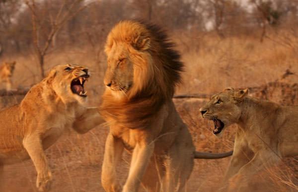 Anadoludaki vahşi hayvanlar