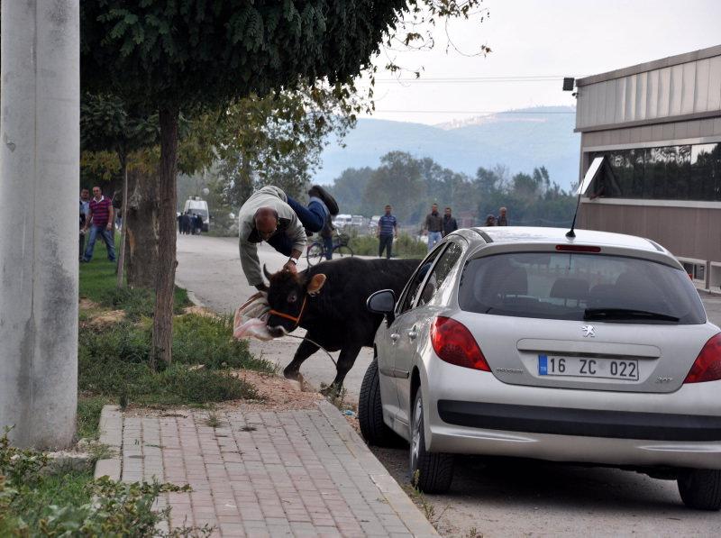 Türkiye'den Kurban Bayramı manzaraları