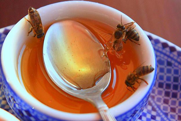 Bal arılarının sırrı çözüldü!