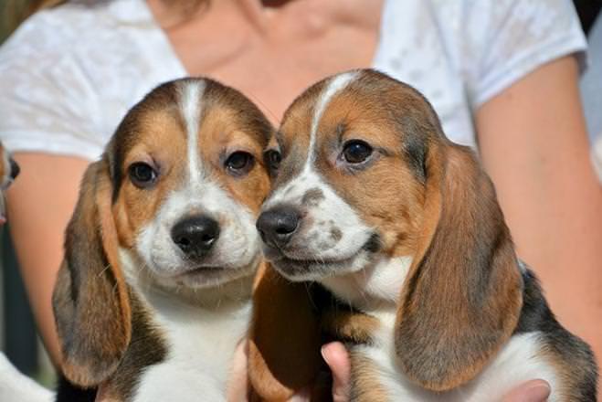 Bu köpekler dünyada bir ilk!