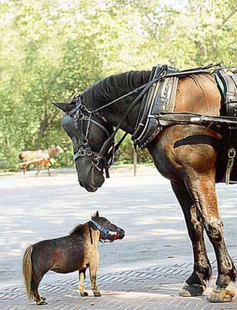 Tiny pony for sale.
