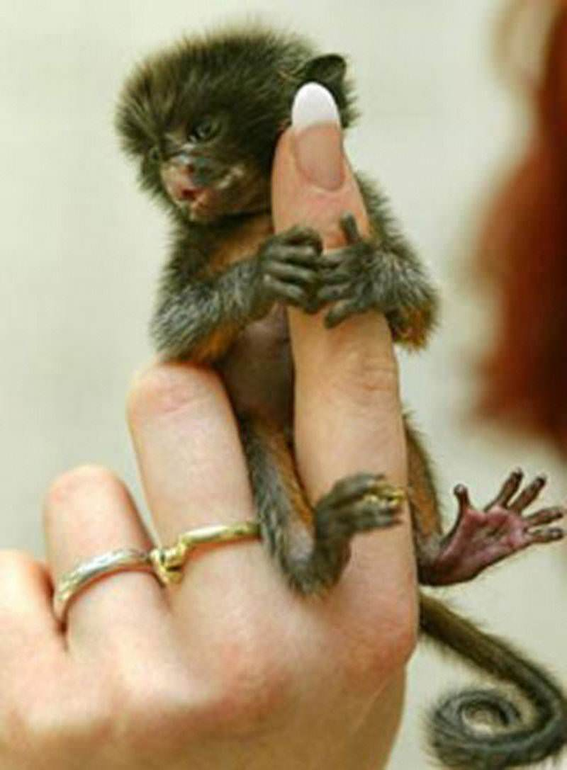 Пальца обезьян 640 высокое 09 JPG.
