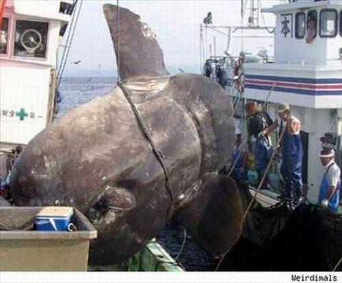 Метки.  Подборка фото самых необычных пойманных рыб. интересно.
