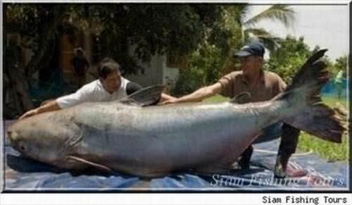 картинки огромных рыб.