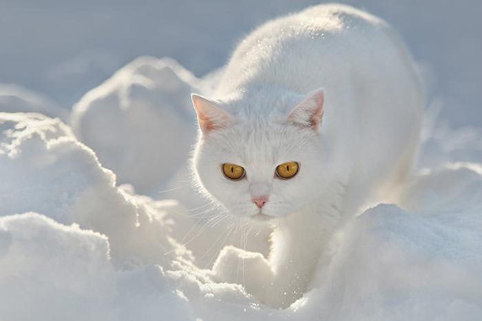 En güzel kedi resimleri - 10. resim