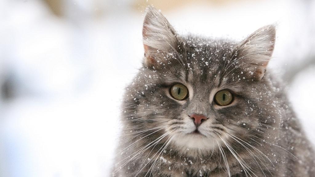 En güzel kedi resimleri - 11. resim
