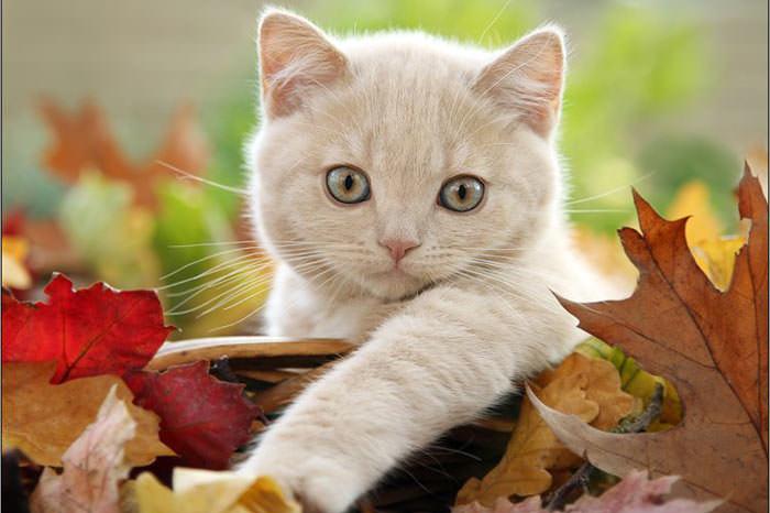 En güzel kedi resimleri - 12. resim