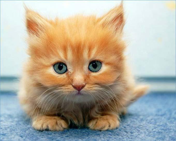 En güzel kedi resimleri - 13. resim
