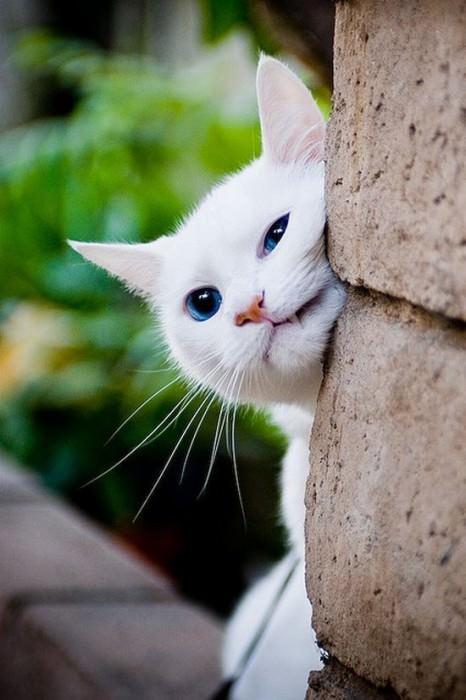 En güzel kedi resimleri - 14. resim