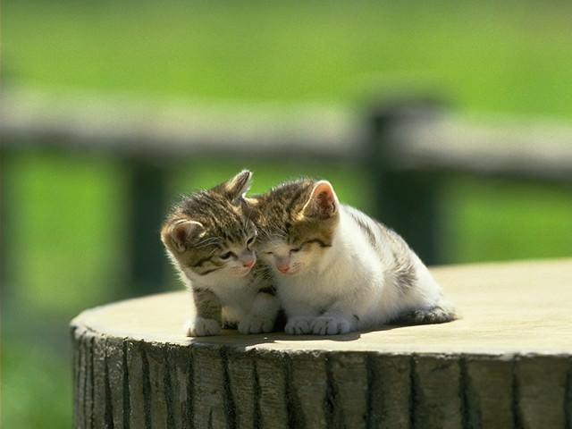 En güzel kedi resimleri - 15. resim