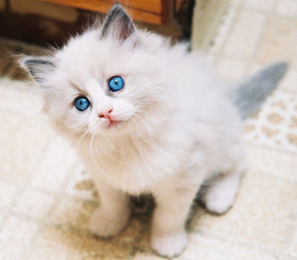 En güzel kedi resimleri - 16. resim