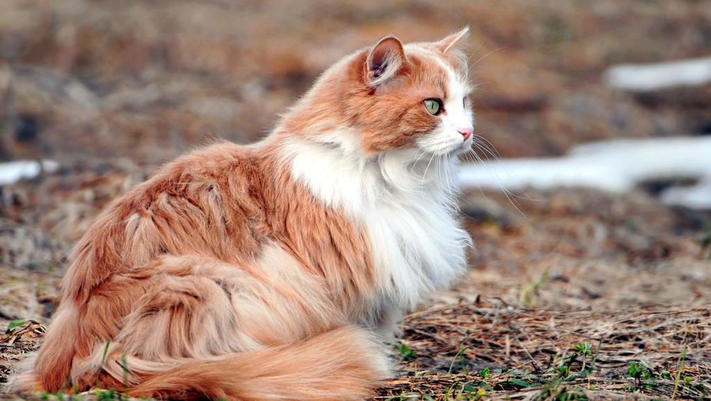 En güzel kedi resimleri - 17. resim