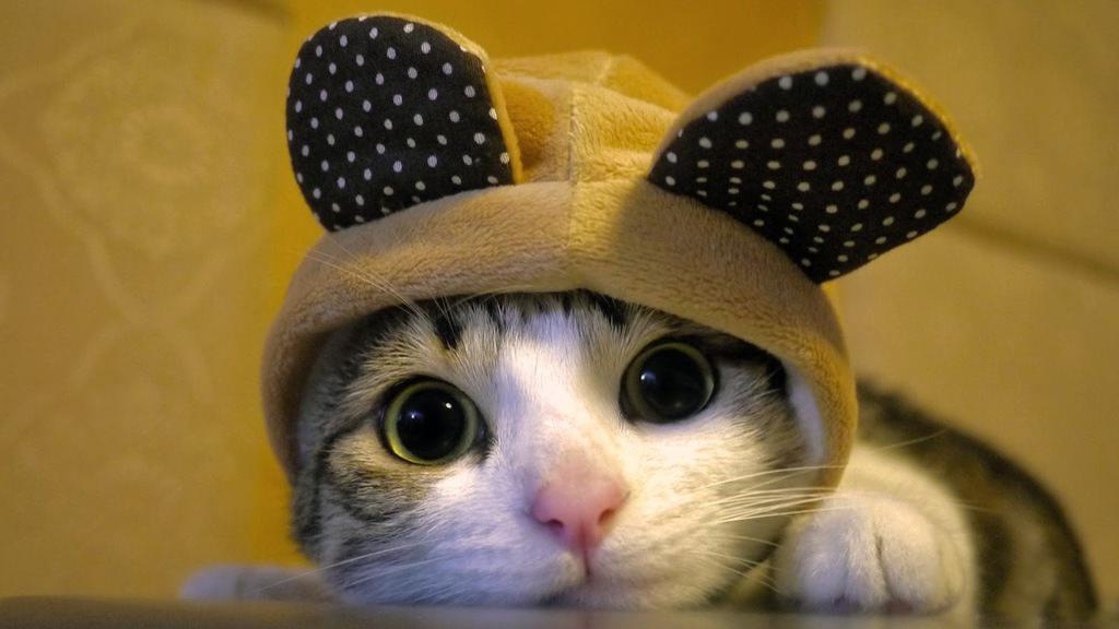 En güzel kedi resimleri - 18. resim