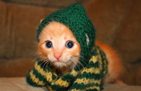 En güzel kedi resimleri - 19. resim