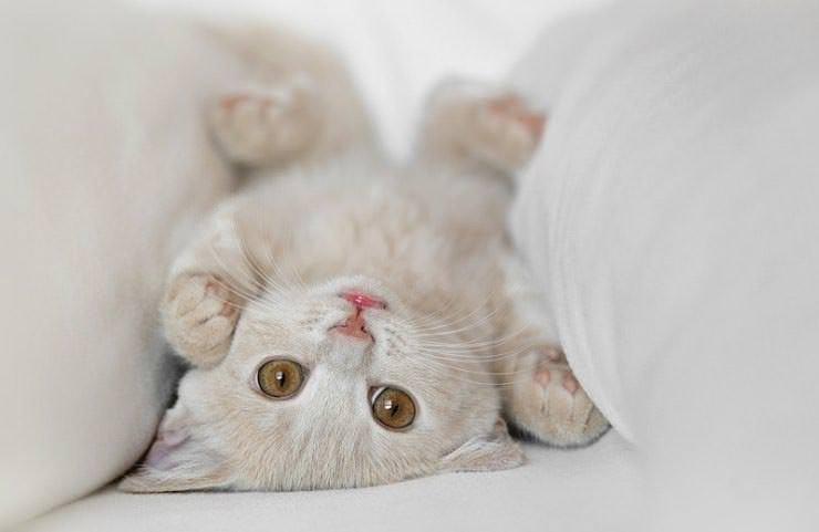 En güzel kedi resimleri - 2. resim