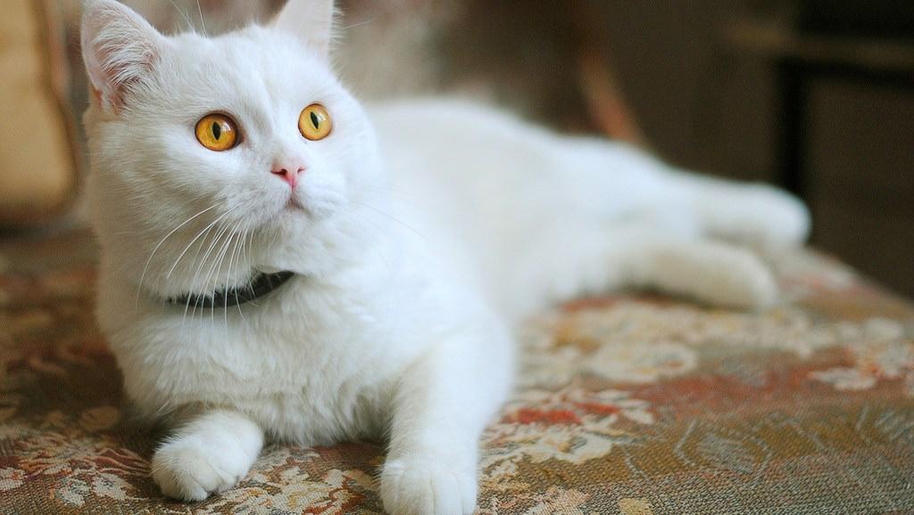 En güzel kedi resimleri - 20. resim